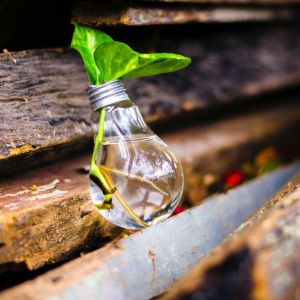 Light bulb with a plant in it